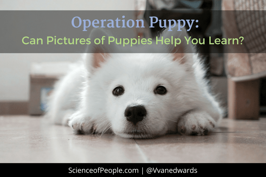 operation puppy, learning
