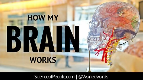 how the brain works