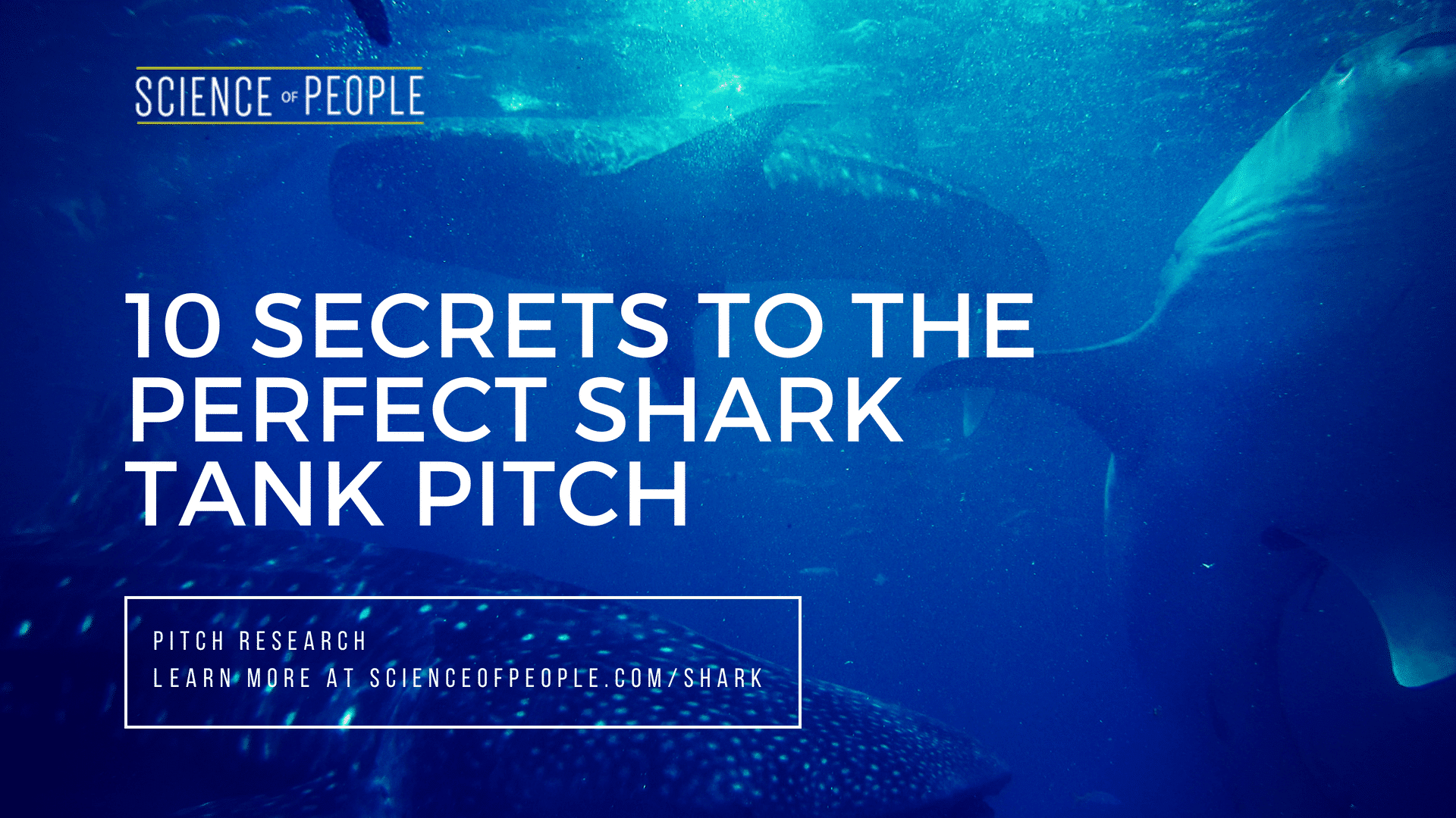 10 Secrets To The Perfect Shark Tank Pitch Science Of People