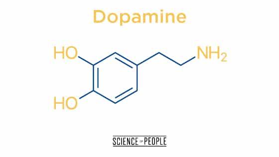 Dopamine, the happy hormone