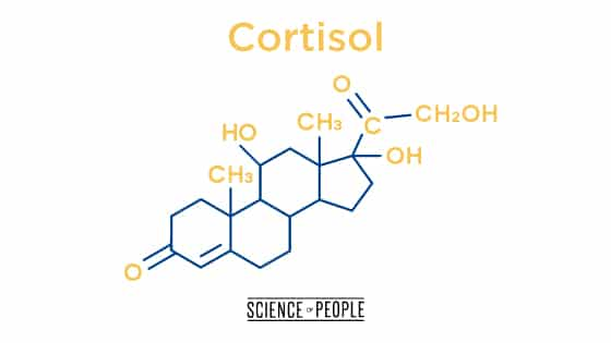 The stress hormone, cortisol