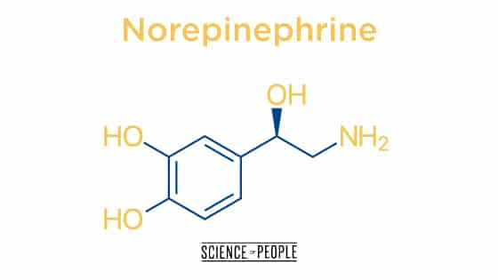 "Norepinephrine, the ""awake"" chemical for anxiety"