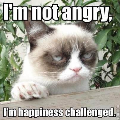 Grumpy Cat (Resting Bitch Face Cat)