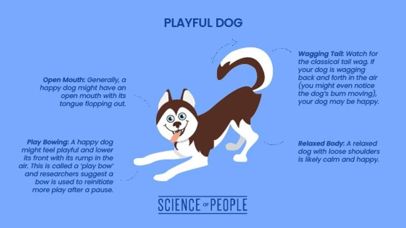 Playful dog body language cues