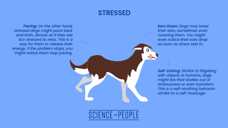 Stressed dog body language cues