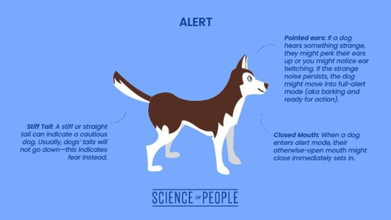 Alert dog body language cues