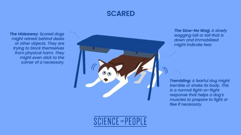 Scared dog body language cues