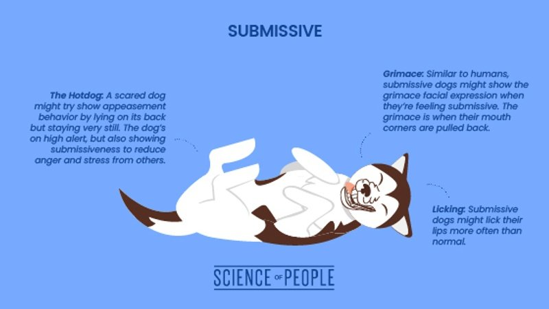 Submissive dog body language cues
