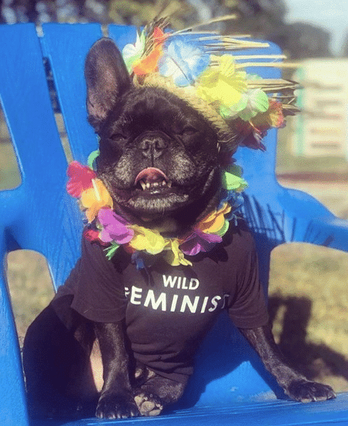 Wildfang dog image, wearing a black wild feminist shirt and colorful decorations